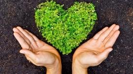 ידיים סביב לב עשוי צמחים
